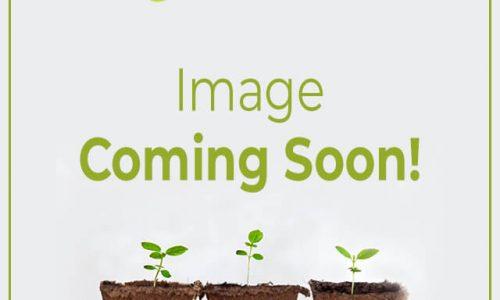 SW garden image coming soon